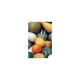 GOURDS-SMALL FRUITED MIX