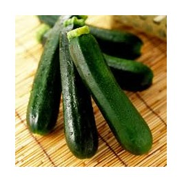ZUCCHINI-BLACK BEAUTY-ORGANIC