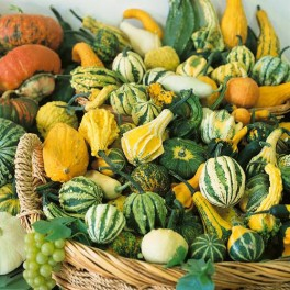 GOURD - SMALL FRUITING MIX