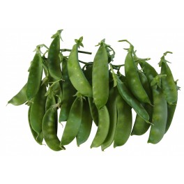 SNOW PEAS FOR SPROUTING