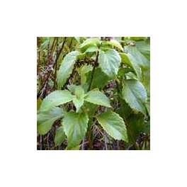 BASIL-CLOVE SCENTED
