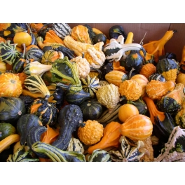 GOURDS-LARGE FRUITED MIX
